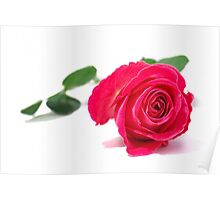 Rose - Red Poster