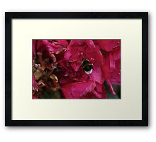 Bee with Pink Flower Framed Print