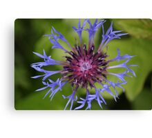 Unusual Blue and Pink Flower Canvas Print