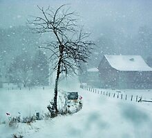 Snow Storm in PA by teresa731
