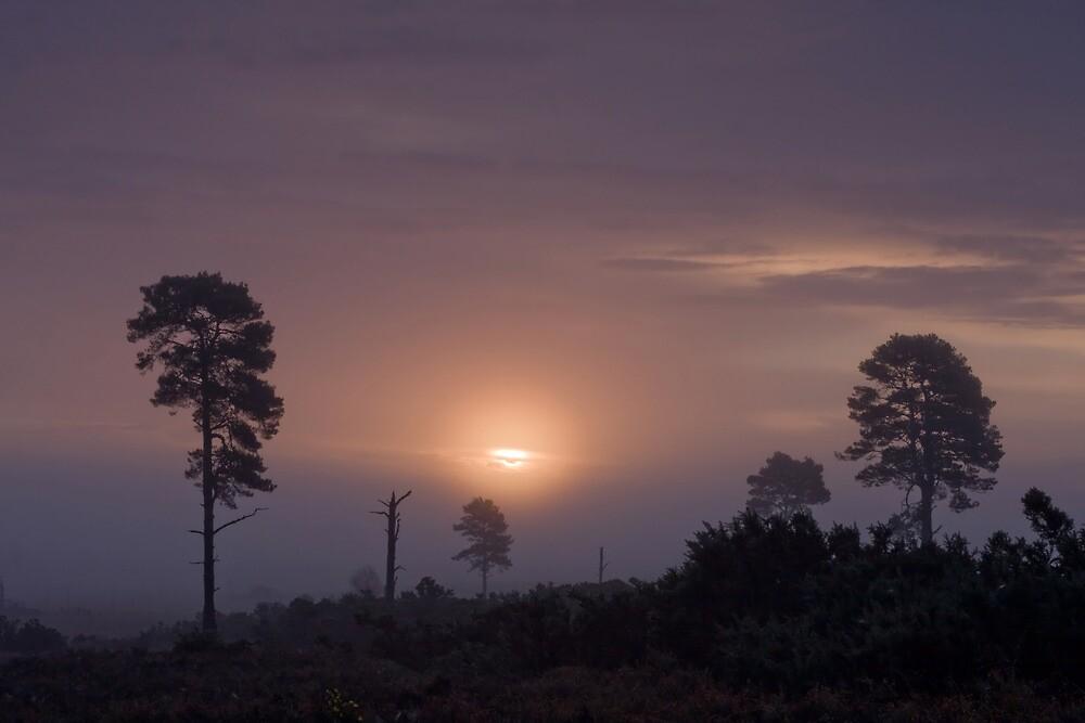 Holt Heath sunrise by Jennifer Bradford