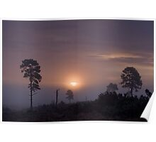 Holt Heath sunrise Poster