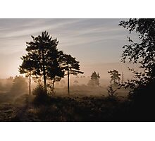 Holt Heath 5 Photographic Print