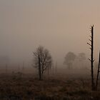 A soft morning on Holt Heath  by Jennifer Bradford