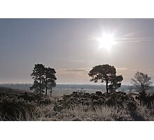 Holt Heath  12 Photographic Print