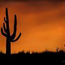 Southwesten Desert's Saguaro Cactus by Mitch Adams