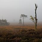 Holt Heath misty morning by Jennifer Bradford