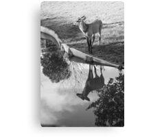 Deer reflex in water Canvas Print
