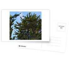 Wild Parrots of Telegraph Hill Postcards