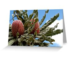 Banksia Menzies Greeting Card