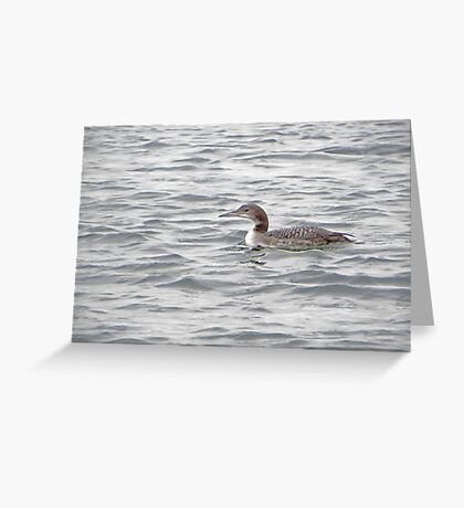 A Loon of Wisconsin Greeting Card