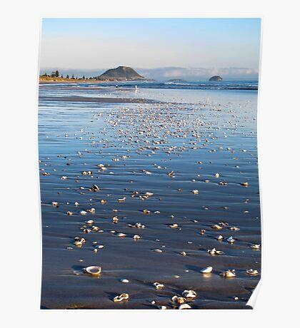 shells on beach Poster