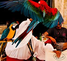 parrots in Dubrovnik by Anne Scantlebury