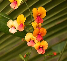 Coral Vine & Zamia Palm by Leonie Mac Lean