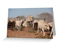 Sheep Olympics Greeting Card