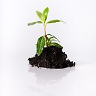 Seedling in Soil on White by Riaan Roux