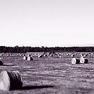 Hay season  by phillip wise