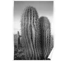 Splitting Saguaro Poster