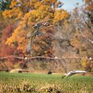 Landing Into Fall by Thomas Young