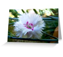 silent in the shade Greeting Card