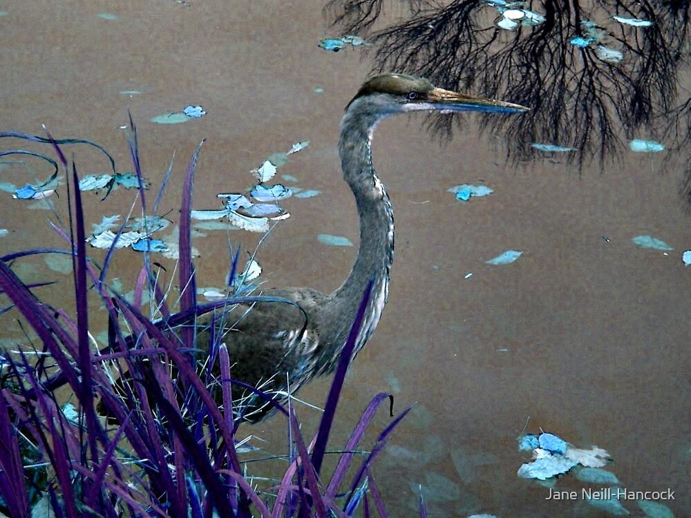 Blue Heron against Purple grass by Jane Neill-Hancock