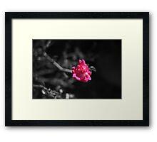 Flower. Framed Print