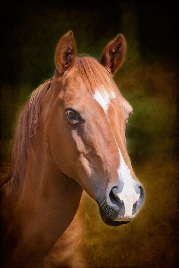 Portrait of a Horse by Chris Cobern