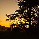 Sun-setting over the Tree by Elaine123