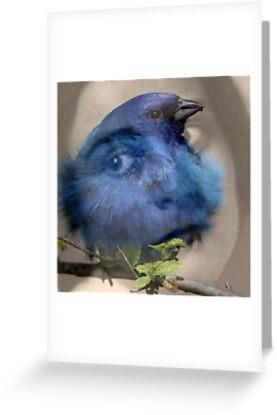 I'm the blue bird by Nightingale