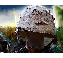 Mushroom Kingdom (1116) Photographic Print