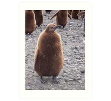 King Penguin chick Art Print