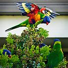 King of the Castle: Rainbow Lorikeet (Trichoglossus haematodus) style by Nick Egglington