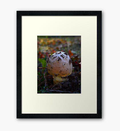 Mushroom Kingdom (0389) Framed Print