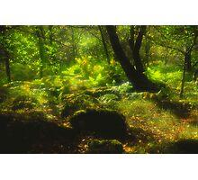 Dart Valley Woods Photographic Print