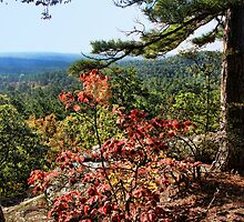 Fall At Robber's Cave by Carolyn  Fletcher