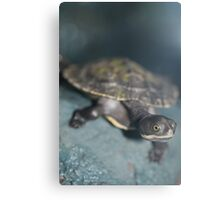 Young Tortise Canvas Print