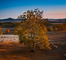Autumn Grassland #2 by Jason Pang, FAPS FADPA