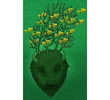 Sea Buffalo Dreaming Green Heart  Photographic Print