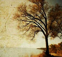 Lonely Tree by ArchetypePhoto