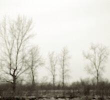 January - Magee Marsh Wildlife Area by Mitch Labuda