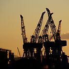 Clyde Cranes by Julie Paterson