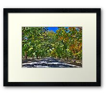 An Autumn Day in the Pecan Orchard Framed Print