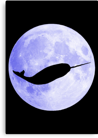 Narwhal!!!!! by ofthebaltic