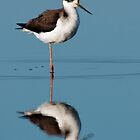 Black-Necked Stilt by Michael Mill