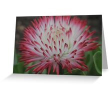 Flowers  - Spike Greeting Card