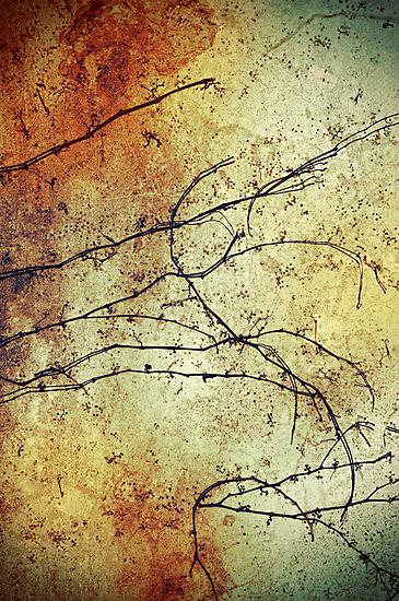 Vine by Silvia Ganora