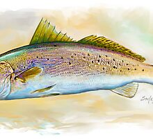 Speckled Trout, Spotted Trout Illustration by Mike Savlen
