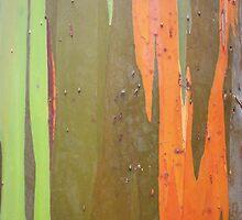Colorful Bark by Sharra Schwartz