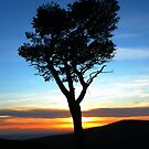 Tree in the sunset by marting04