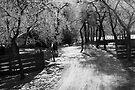 Winter Light by Walter Quirtmair